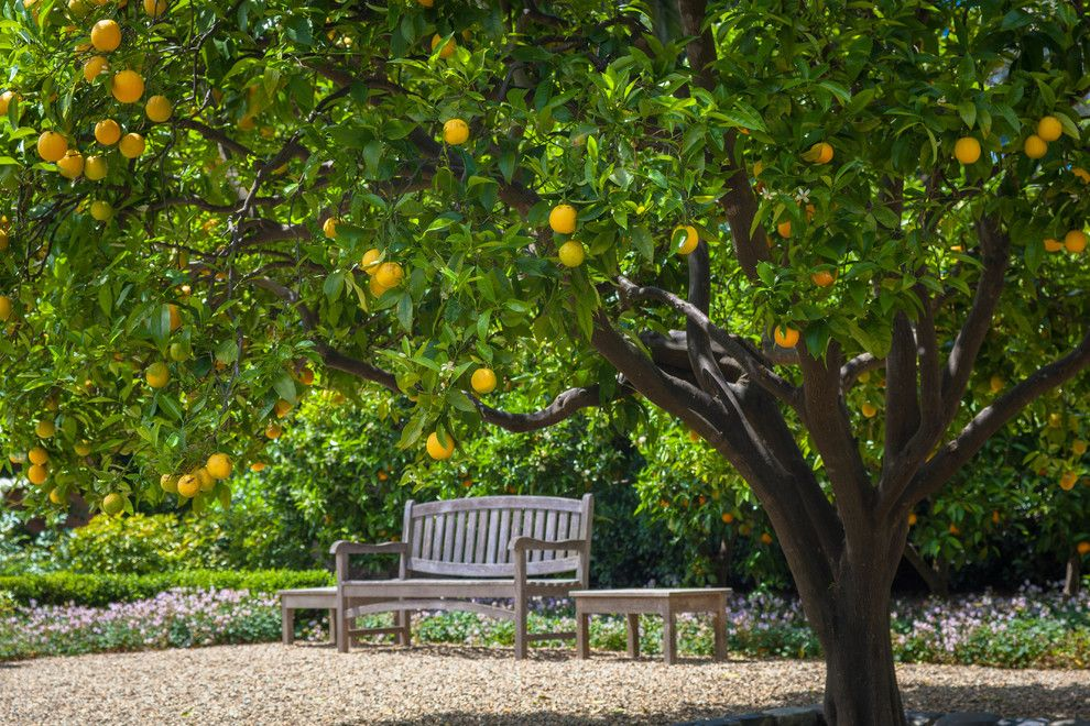 A1 Mulch for a Traditional Landscape with a Flowers and Under the Orange Tree by Terra Ferma Landscapes
