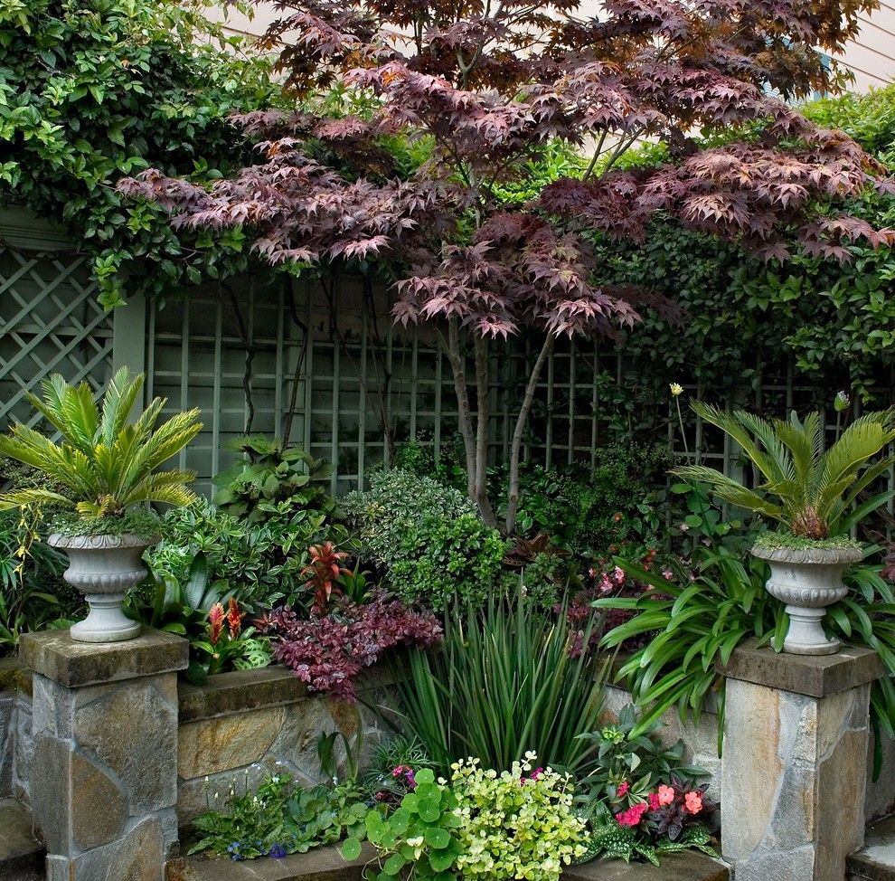 Beautiful Backyards for a Eclectic Landscape with a Japanese Maple and Formal in Noe Valley by Terra Rubina