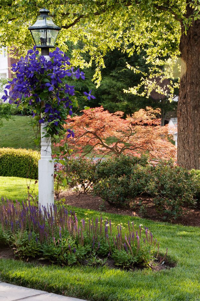 Chinese Pistachio Tree for a Traditional Landscape with a Small Tree and Landscape Elements by D & a Dunlevy Landscapers, Inc.