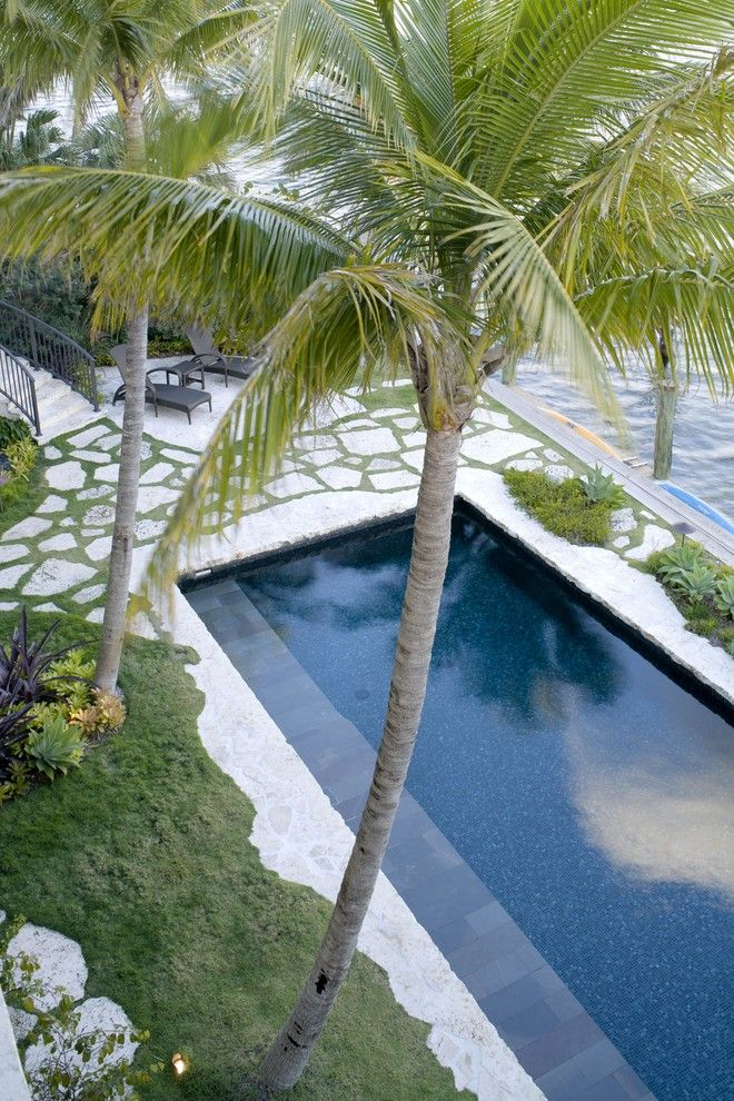 Clover Pools for a Tropical Pool with a Palm Trees and Residential Oasis by Epic Stoneworks, Inc.