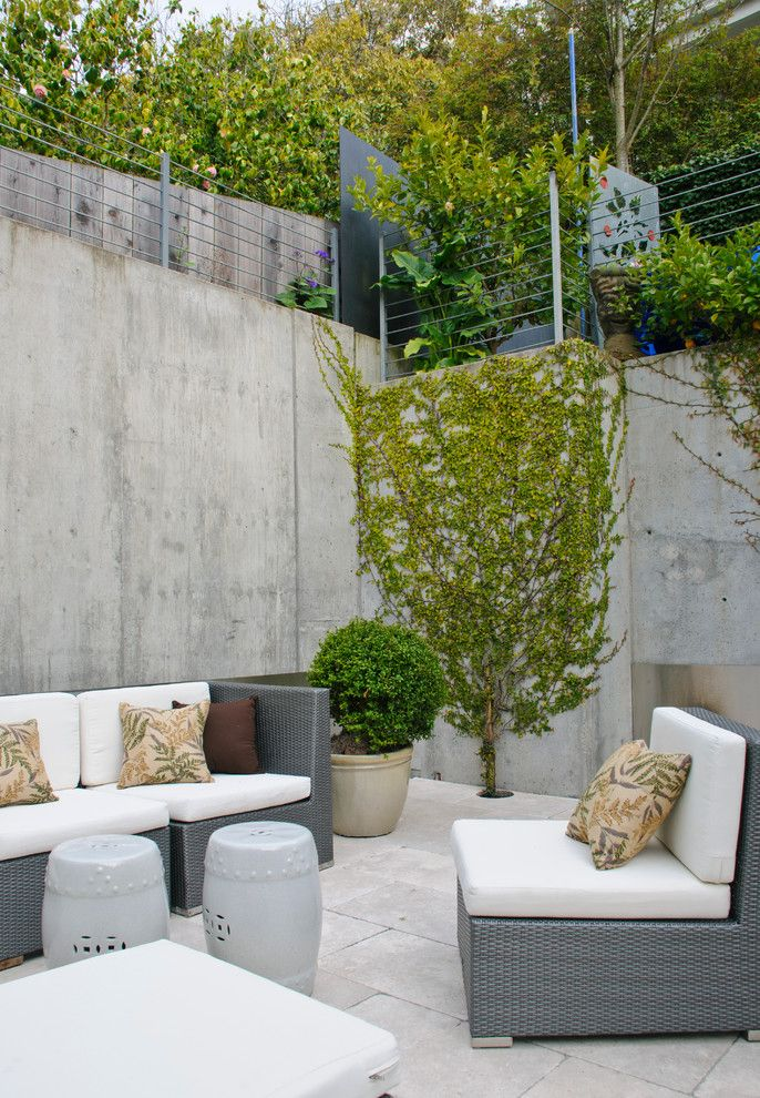Concrete vs Asphalt for a Contemporary Patio with a Climbing Plants and Pacific Aveue House by Riaz Design