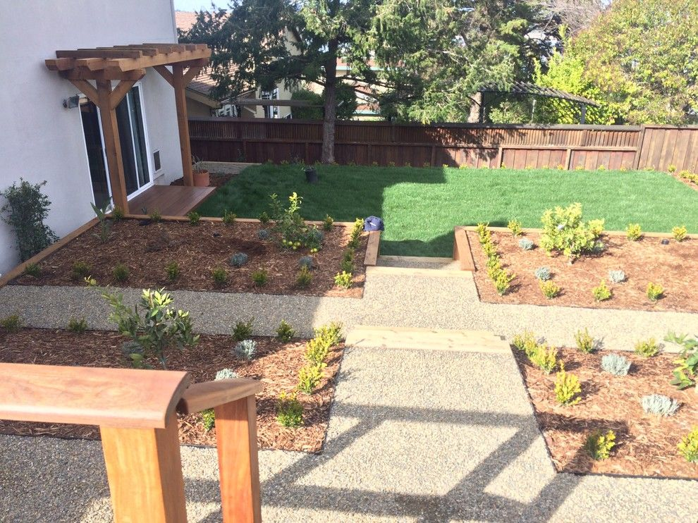 Delta Bluegrass for a Contemporary Landscape with a Boxwood Green Beauty and Corte Madera Classic by the Land Collaborative