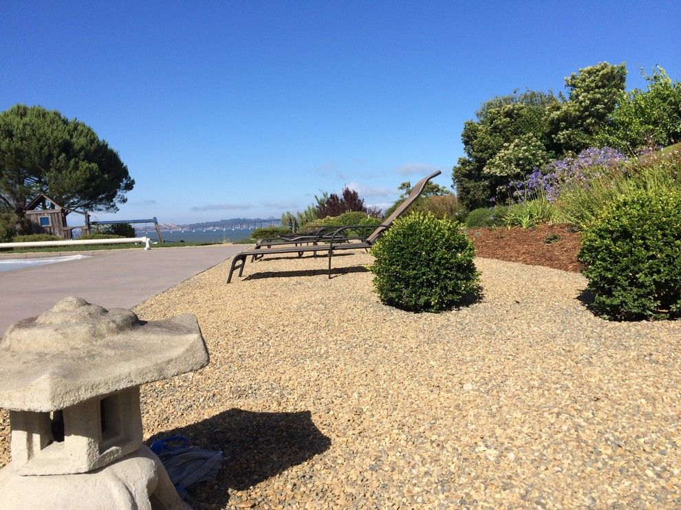 Delta Bluegrass for a  Landscape with a Corte Madera and Corte Madera Pool Renovation by the Land Collaborative