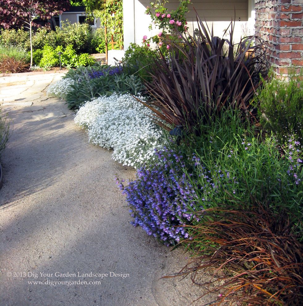 Drainage Ditch for a Mediterranean Landscape with a Beautiful Plant Combination and Plant Combinations   Northern California Gardens by Dig Your Garden Landscape Design