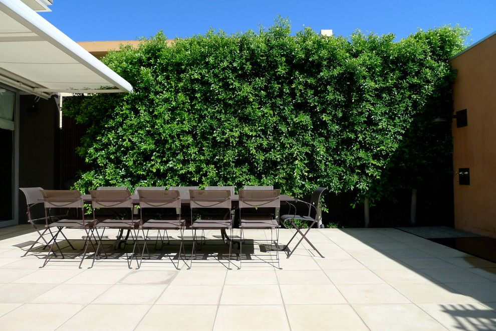 Ficus Nitida for a Contemporary Patio with a Ficus and Clean and Simple by Verdigris