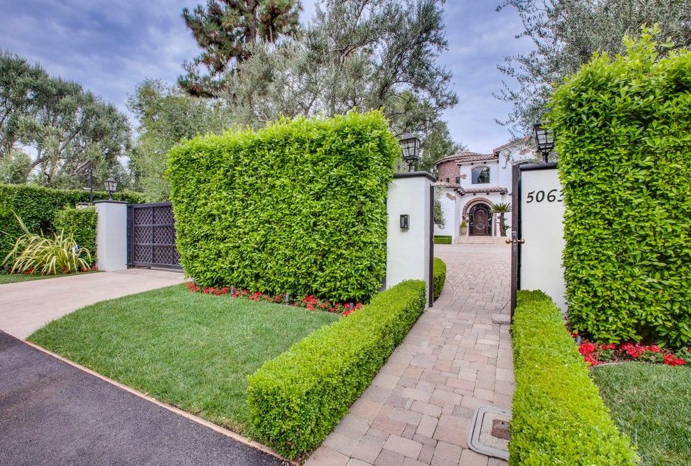 Ficus Nitida for a Mediterranean Landscape with a Entry and Encino Landscape Design Project by Luke Gibson Photography