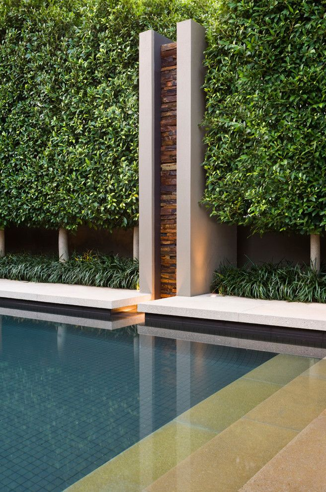 Ficus Nitida for a Modern Pool with a Anston Paving Stones and Modern Pool by Anston.com.au