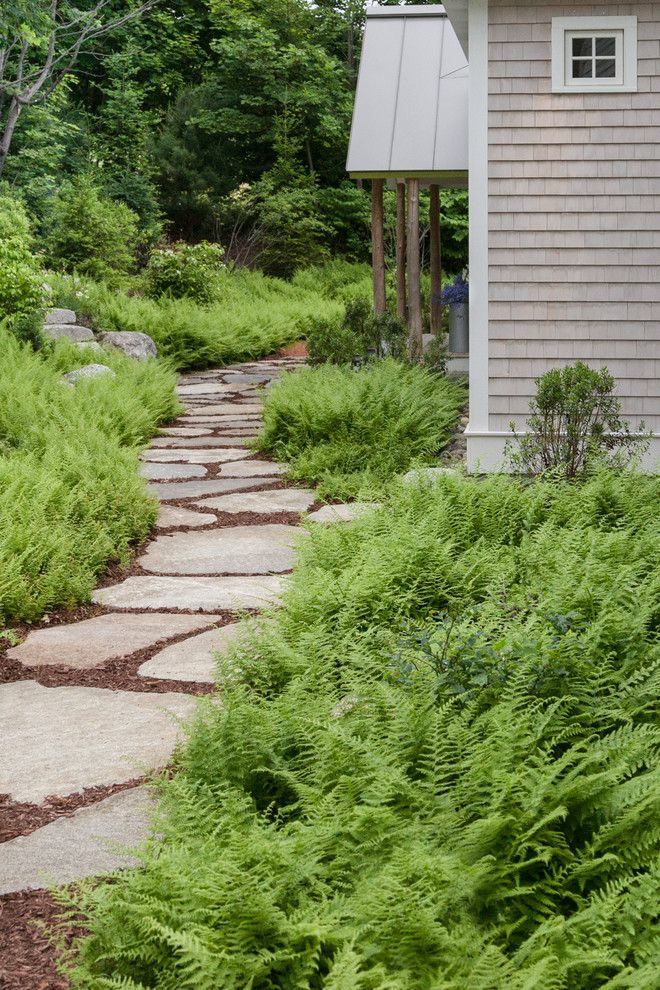 Flagstone Path for a Beach Style Landscape with a Fern Garden and Clamshell Alley by Matthew Cunningham Landscape Design Llc