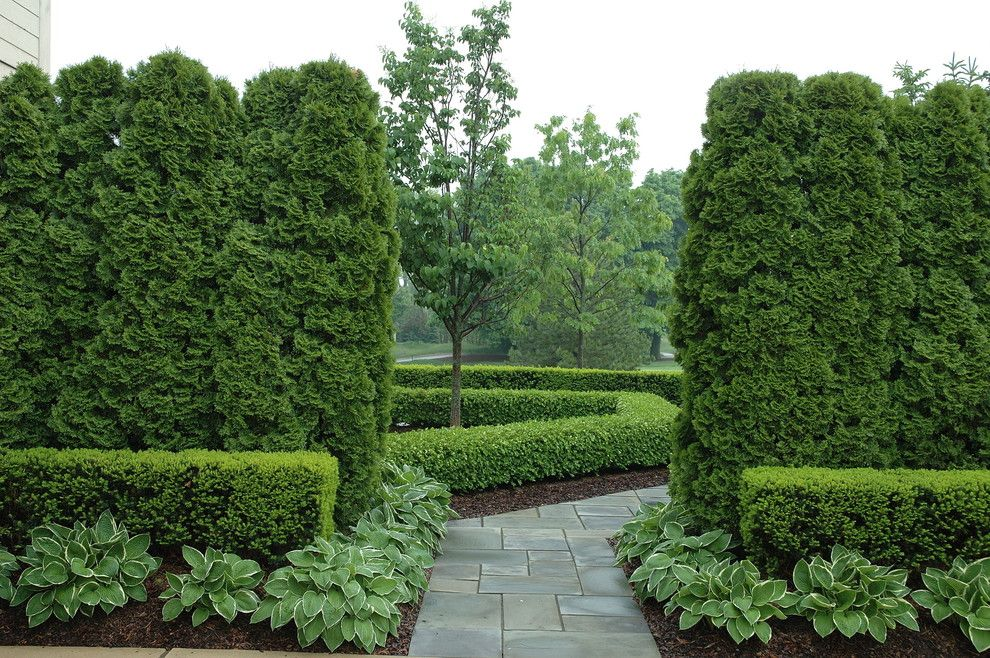 Flagstone Path for a Traditional Landscape with a Arborvitae and Formal Graden Path with Arborvitae and Boxwood by Land Architects, Inc.