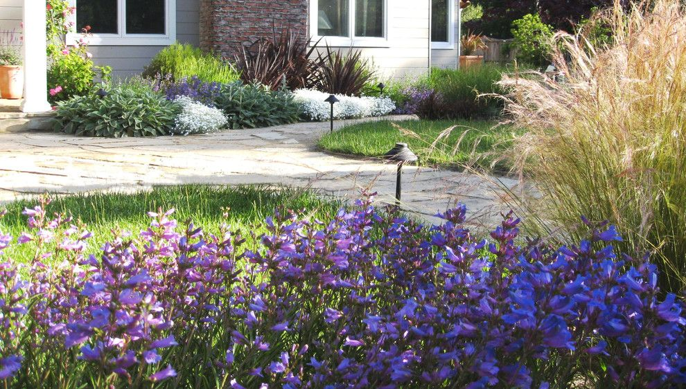 Fx Luminaire for a Mediterranean Landscape with a Contemporary Plants and Mediterranean Garden in San Anselmo, Ca by Dig Your Garden Landscape Design