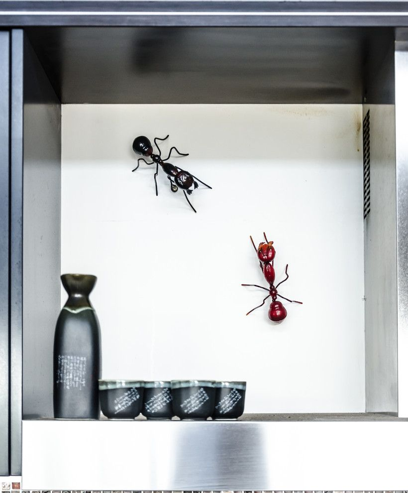 Get Rid of Fruit Flies for a Tropical Spaces with a Ants and Gold Coast Residence by Katische Haberfield  Photographer