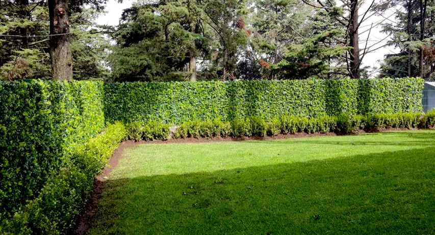 Green Demolitions for a Traditional Landscape with a Plant Fence and Privacy Solutions with Greensmart Decor by Greensmartdecor