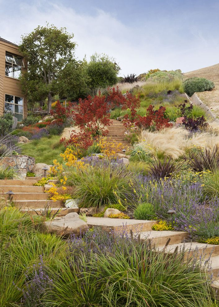 Hillside Landscaping for a Beach Style Landscape with a Carex Pansa and Tiburon Hillside by Arterra Landscape Architects