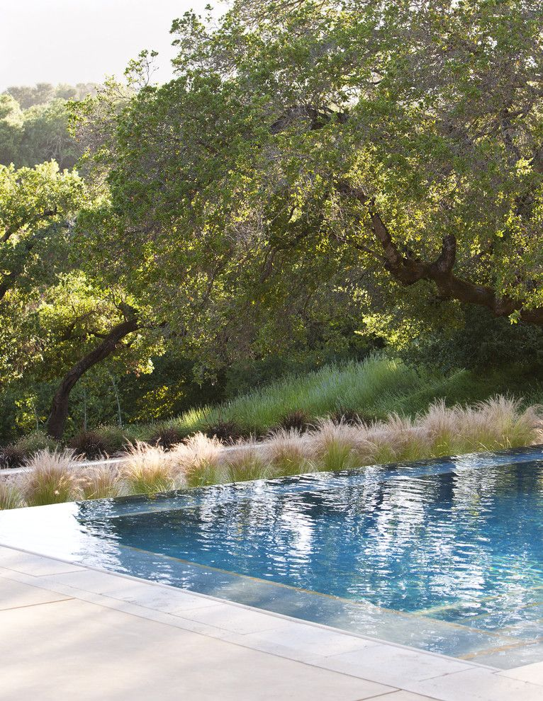 Infinity Edge Pool for a Contemporary Pool with a Low Water Grasses and Vanishing Edge Pool by Arterra Landscape Architects