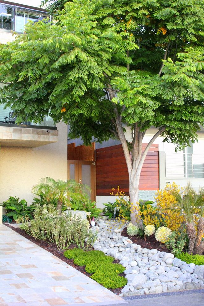 Kangaroo Paw Plant for a Contemporary Landscape with a Landscape and Brennan Residence by Creative Atmospheres, Inc.