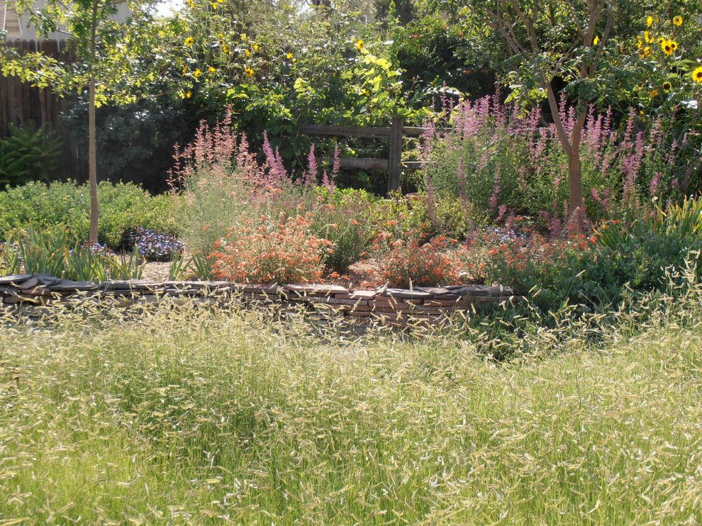 Lowes Albuquerque for a Traditional Landscape with a Zauchneria and Valley Backyard by Waterwise Landscapes Incorporated
