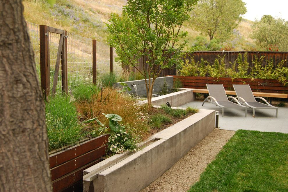 Lowes Bloomfield Ct for a Modern Landscape with a Grasses and Garnet Residence by Envision Landscape Studio
