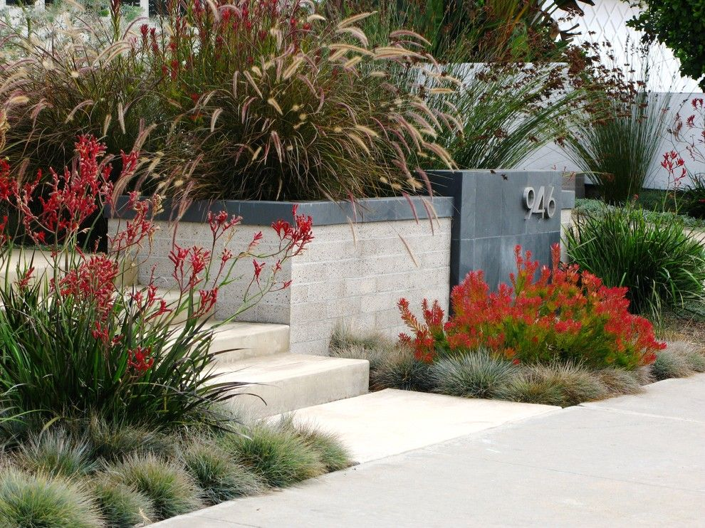 Lowes Carlsbad for a Contemporary Landscape with a Front Garden and Debora Carl Landscape Design by Debora Carl Landscape Design