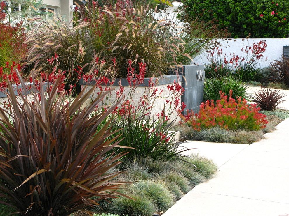 Lowes Carlsbad for a Contemporary Landscape with a Slate and Debora Carl Landscape Design by Debora Carl Landscape Design