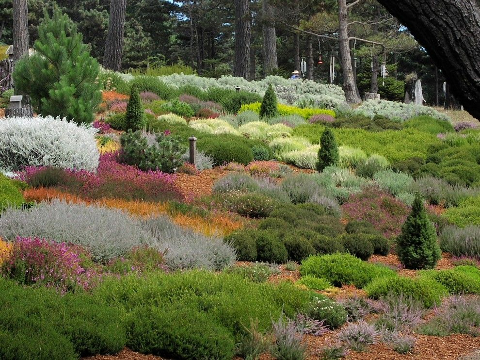 Lowes Chino Hills for a Contemporary Landscape with a Slope and Gualala Sea Side Heather Garden by Derviss Design