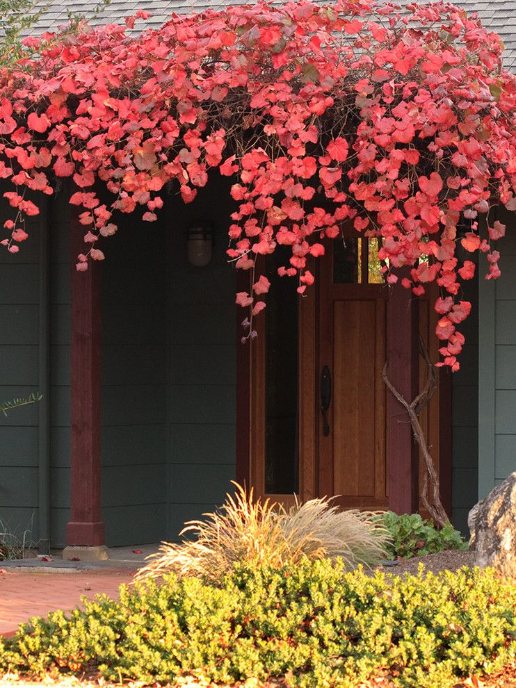 Lowes Sioux Falls for a Contemporary Entry with a Red Bush and Vitis 'Roger's Red' by John J. Kehoe Photography