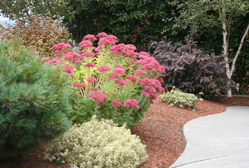 Lowes Sioux Falls for a  Spaces with a  and Sedum 'Autumn Joy' by Genevieve Schmidt