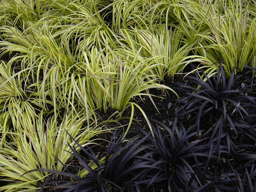 Lowes State College Pa for a  Landscape with a  and Ophiopogon Planiscapus 'Nigrescens' by Flickr.com