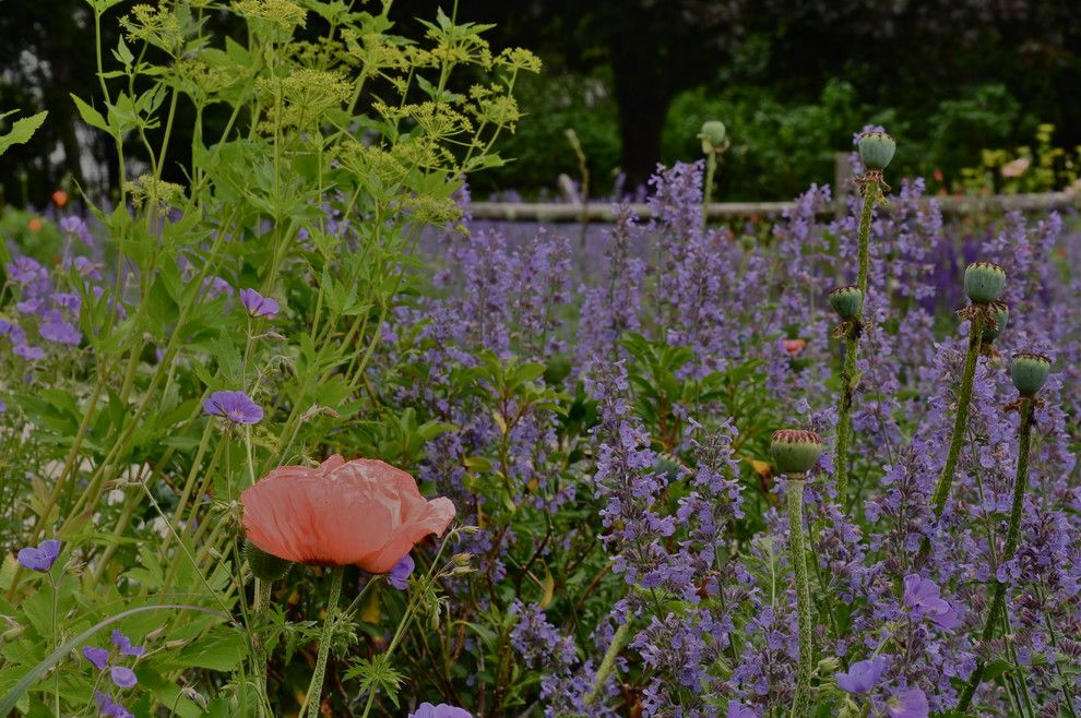 Lowes Stockton Ca for a Contemporary Landscape with a Contemporary and Nepeta by Brian Maloney Design Associates