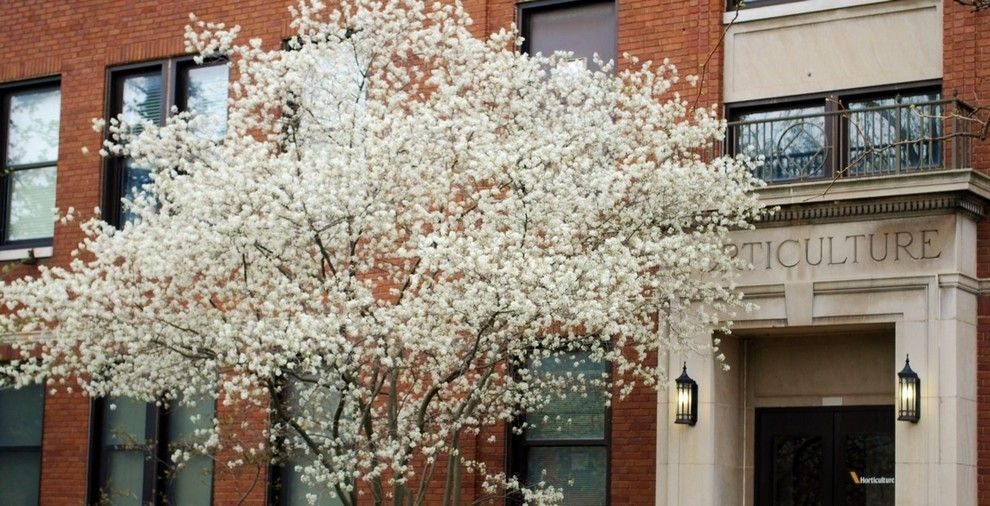 Osuna Nursery for a Traditional Landscape with a Garden Art and Plant of the Week — Serviceberry by Gardenart