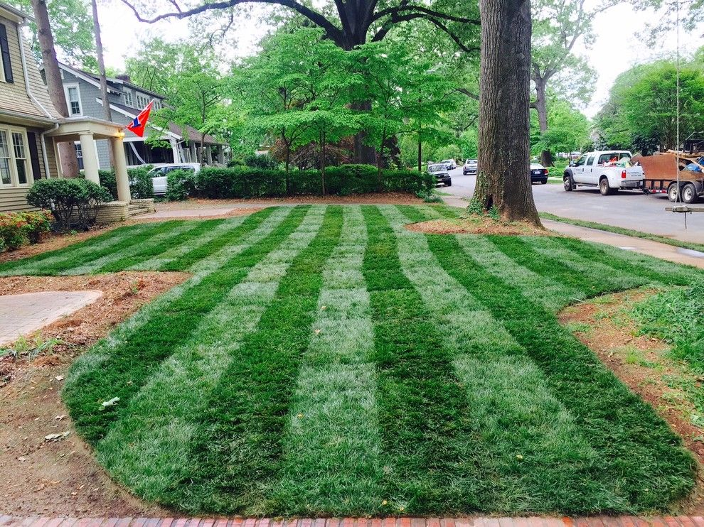 Super Sod for a Traditional Landscape with a Kids Swing and Elite Tall Fescue Lawn by Super-Sod