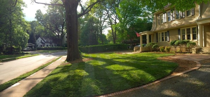 Super Sod for a Traditional Landscape with a Tall Fescue and Elite Tall Fescue Lawn by Super-Sod