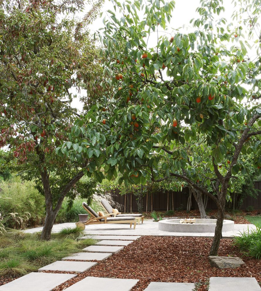 Texas Ranger Plant for a Contemporary Patio with a Orange Tree and Orchard by Arterra Landscape Architects