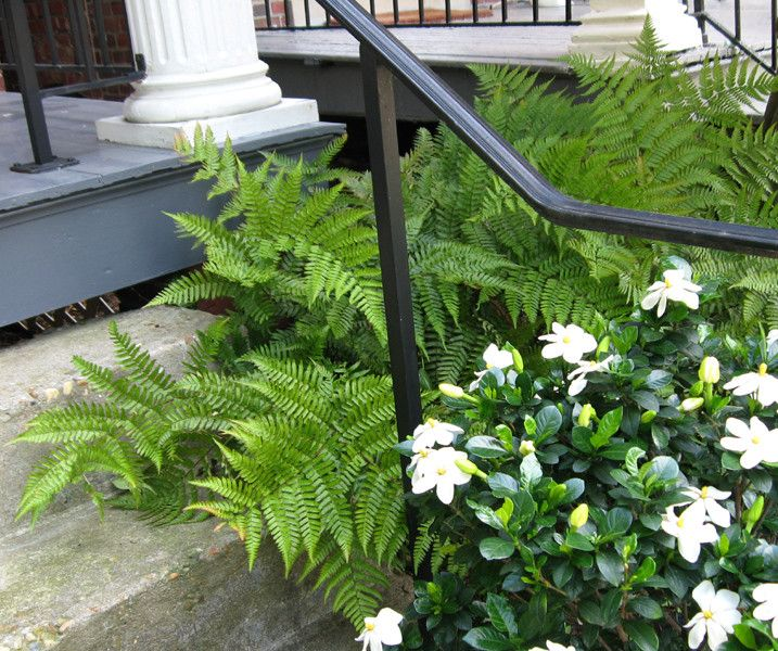 Tlc Landscaping for a Traditional Landscape with a Front Porch and Fragrant Front Steps by Gardens by Monit, Llc