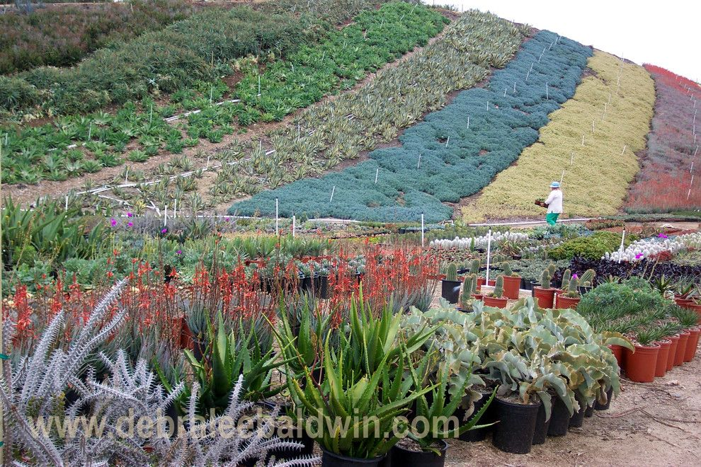 Waterwise Botanicals for a Eclectic Landscape with a Succulent Designs and Succulent Gardens by Debra Lee Baldwin