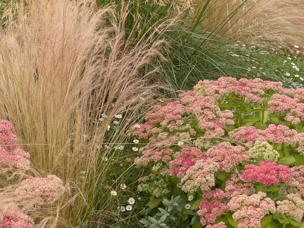 Xeriscaping for a Traditional Landscape with a Daisy and Great Plant Combinations by Le Jardinet