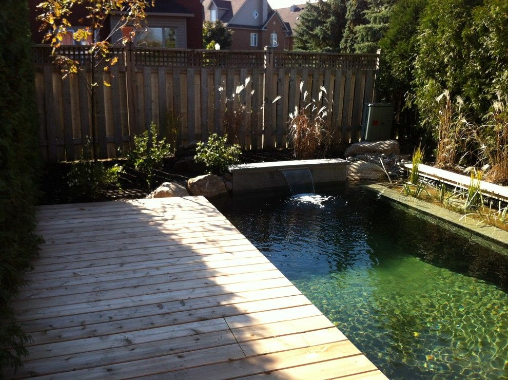 Exposed Aggregate Concrete for a Traditional Pool with a Natural Pool and Piscine Naturelle by Symbiose Paysage Inc.
