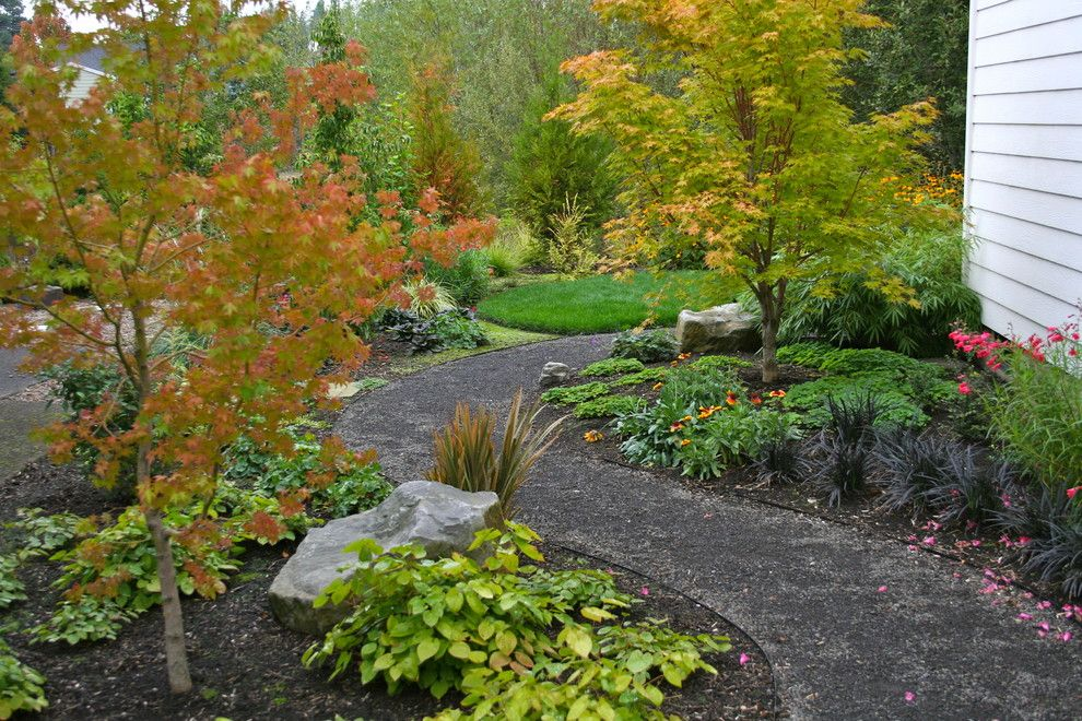 Maple Lawn Farms for a Traditional Landscape with a Black Mondo Grass and After: New Curving Gravel Path by Visionscapes Nw Landscape Design
