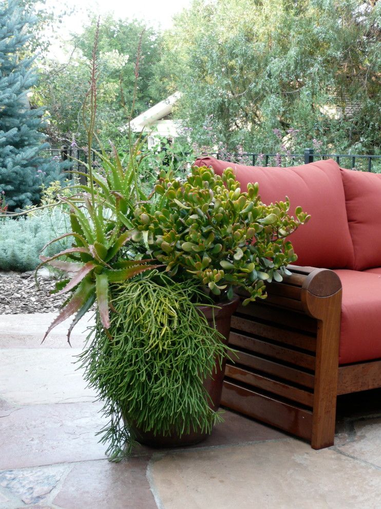 Abc Supply Denver for a Tropical Patio with a Design and Gun Club Green by Denver Dirty Girls