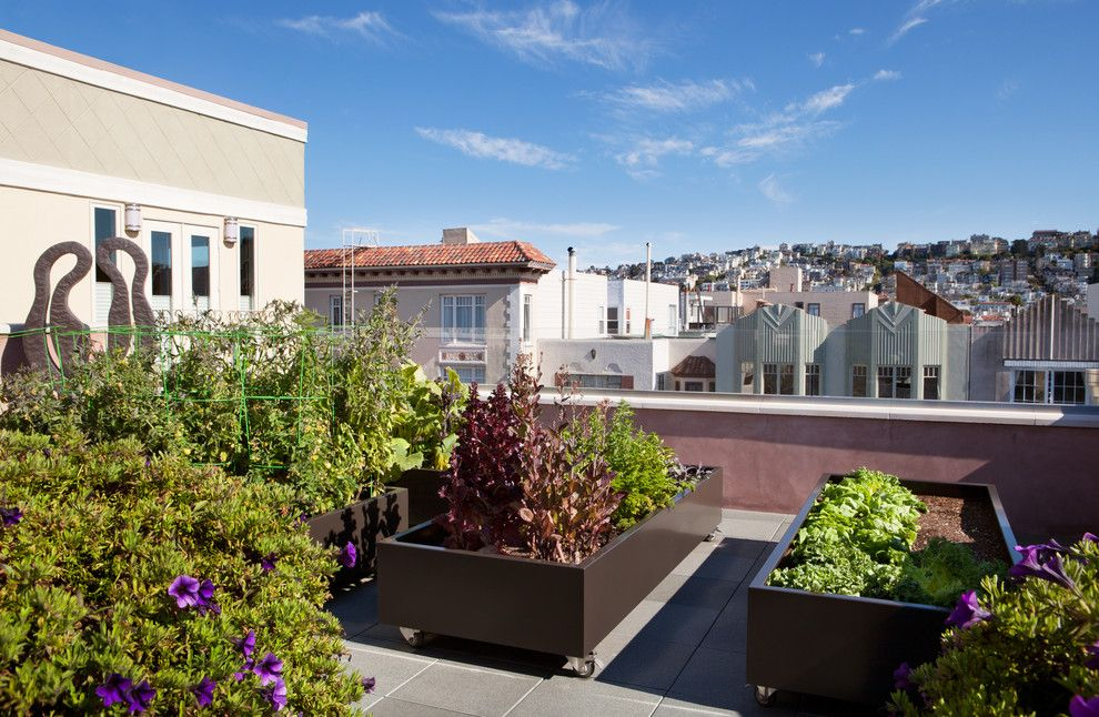 Alden San Francisco for a Modern Deck with a Purple Flowers and San Francisco by Envision Landscape Studio