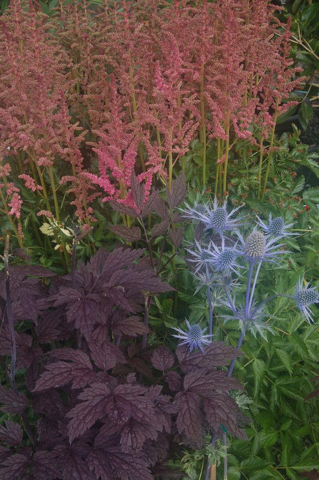 Allside for a Eclectic Landscape with a Eclectic and Actaea/cimicifuga Simplex 'Hillside Black Beauty' by Julie