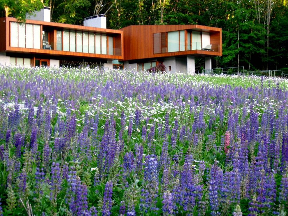 Atwal Eye Care for a Modern Landscape with a Flat Roof and Kent, Ct Wildflower Meadow by Designing Eden Llc