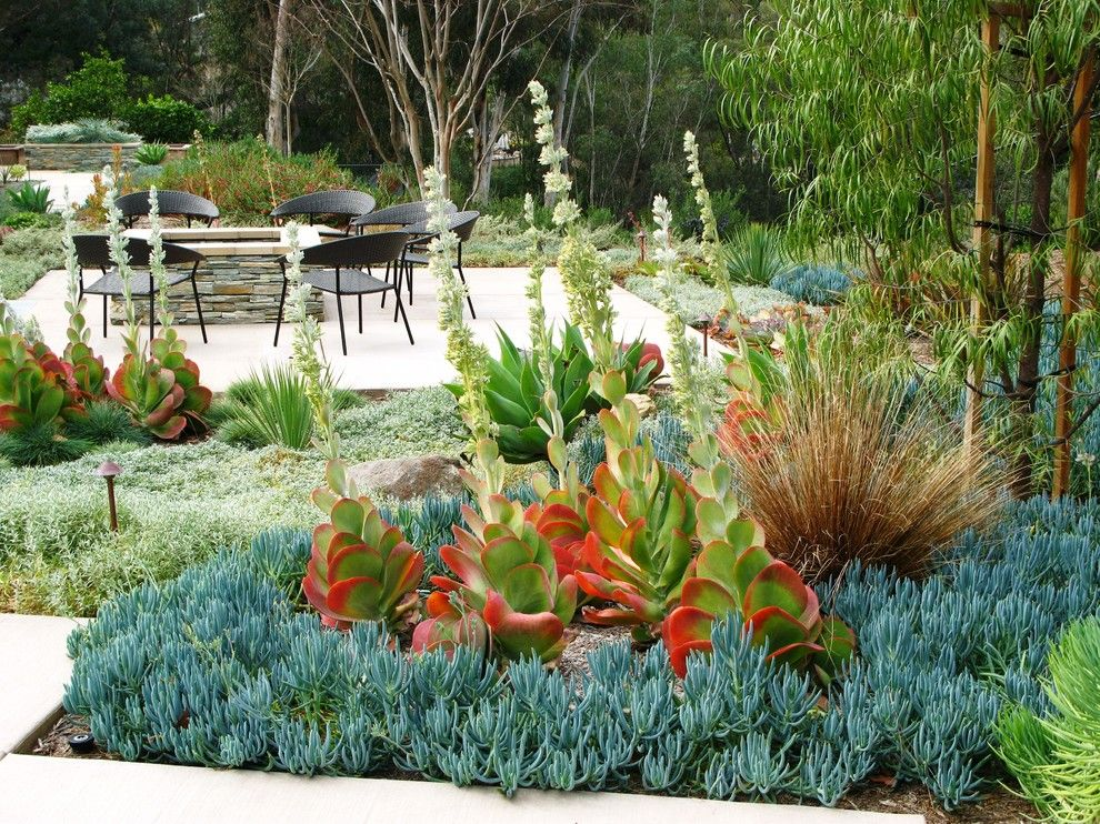 Beach Cottages San Diego for a Contemporary Landscape with a Succulents and Debora Carl Landscape Design by Debora Carl Landscape Design