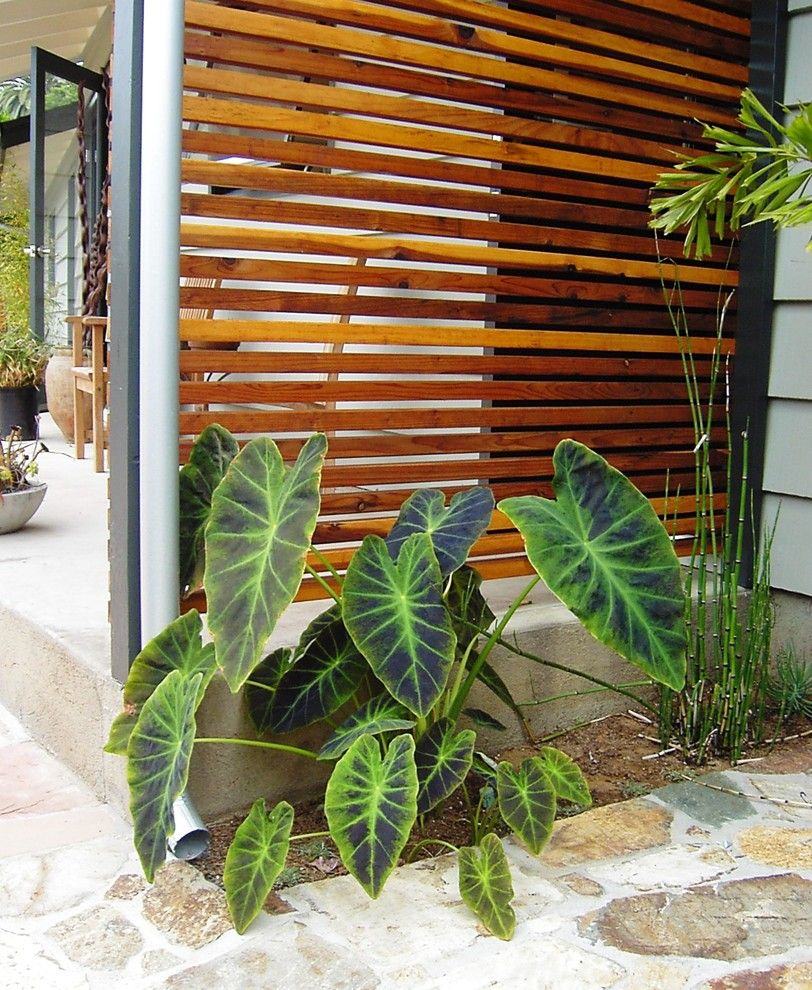 Carls Patio for a Contemporary Landscape with a Low Water Use and Debora Carl Landscape Design by Debora Carl Landscape Design