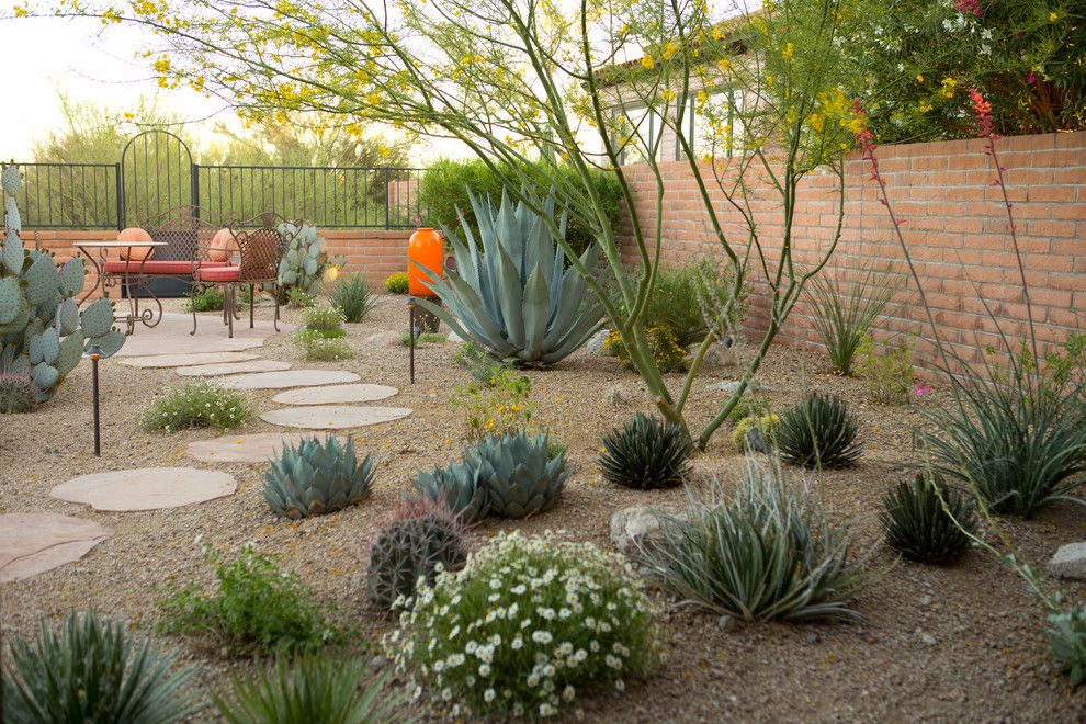 Catalina Flower for a Mediterranean Landscape with a Catalina Foothills Tucson Az and Desert Gem by Landscape Design West, Llc