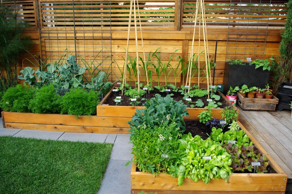 Chagrin Pet and Garden for a Contemporary Landscape with a Wood Raised Bed and Aloe Test Garden by Aloe Designs