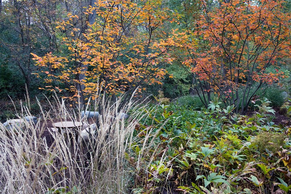 Cornus Sericea for a Contemporary Landscape with a Fall Color and Northbrook, Il Residence (A) by Van Zelst Inc