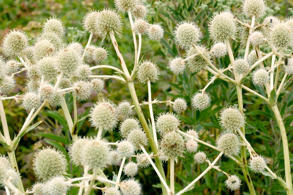 Cornus Sericea for a Traditional Landscape with a Traditional and Rattlesnake Master by Frank Mayfield