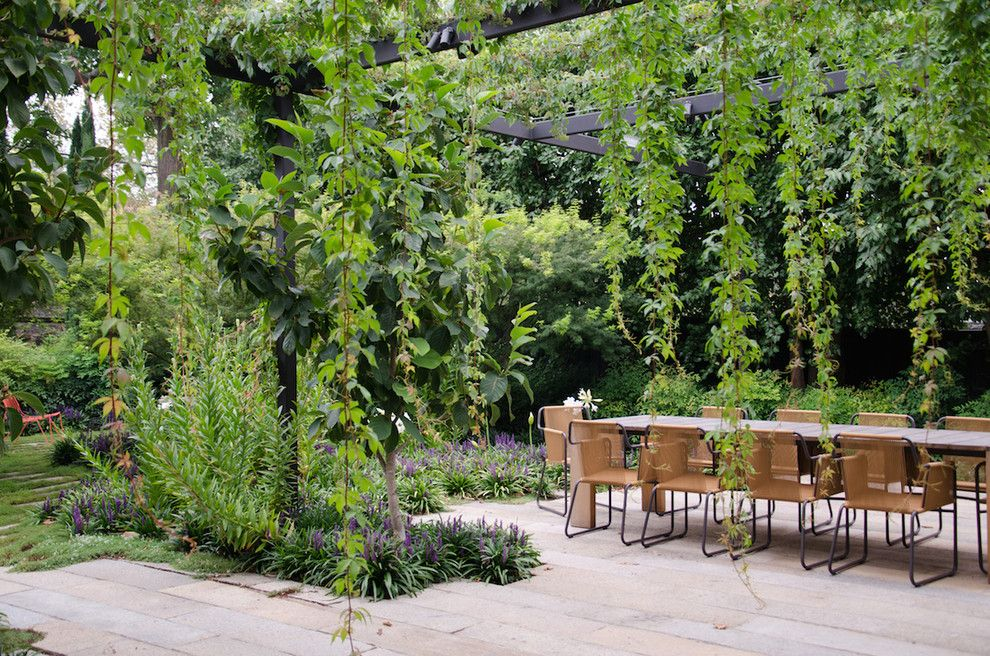 Edens Garden for a Contemporary Patio with a Climbing Plants and Toorak by Eckersley Garden Architecture