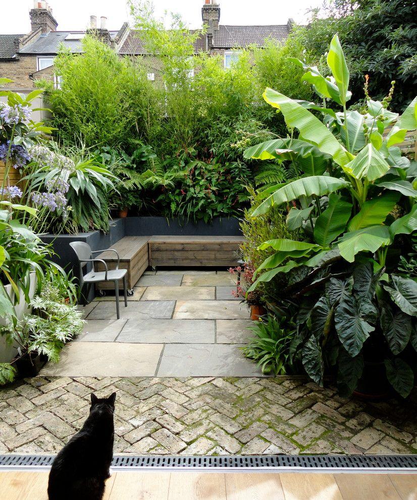 Evergreen Terrace Apartments for a Contemporary Patio with a Tropical Urban Garden and Urban Tropical by Antonia Schofield Garden Design