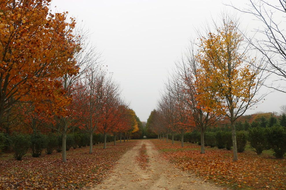 Fannin Tree Farm for a Transitional Landscape with a Perennial Gardens and Southampton Farm by Warren's Nursery